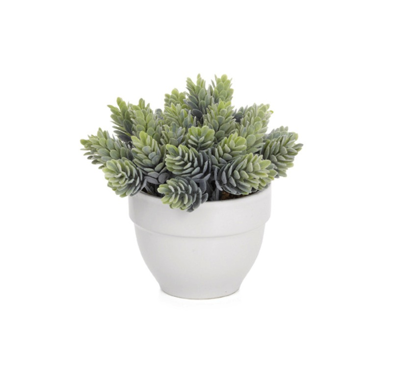 Torre & Tagus Potted Cluster Succulent